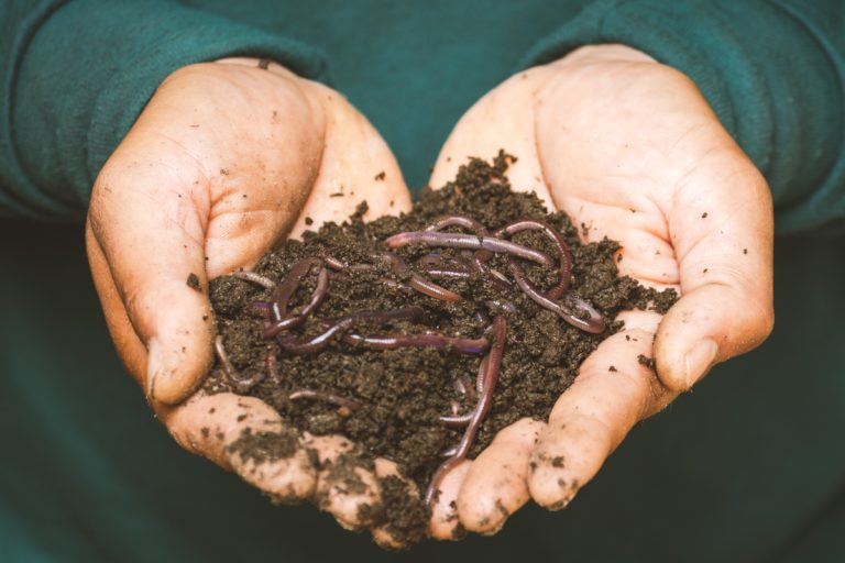 Create your own wormery!